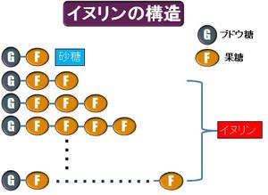 イヌリン構造